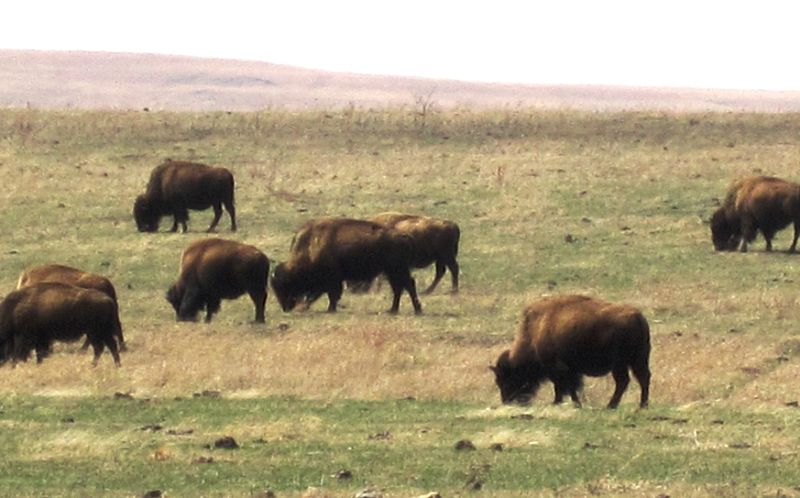 Tallgrass Prairie Preserve