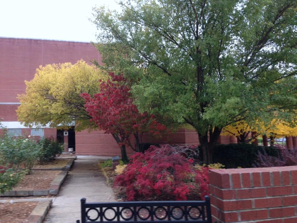 Trees at the Walton Art Center