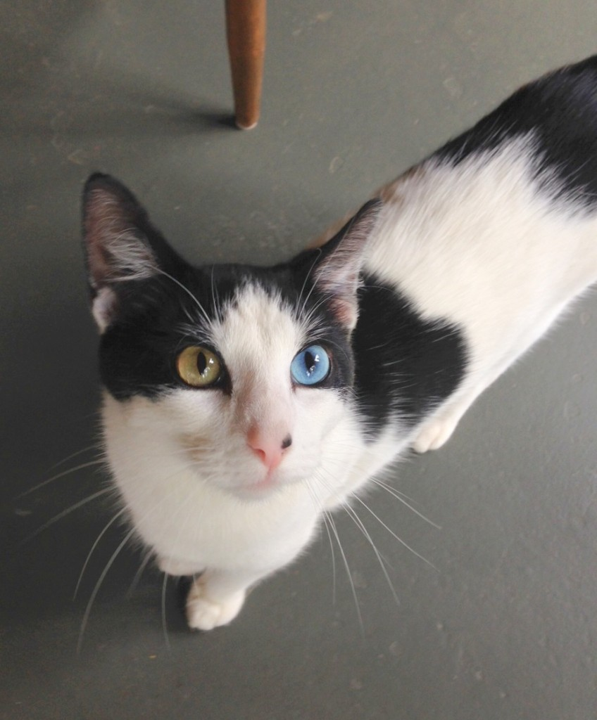 Our new neighbor has different eye colors.