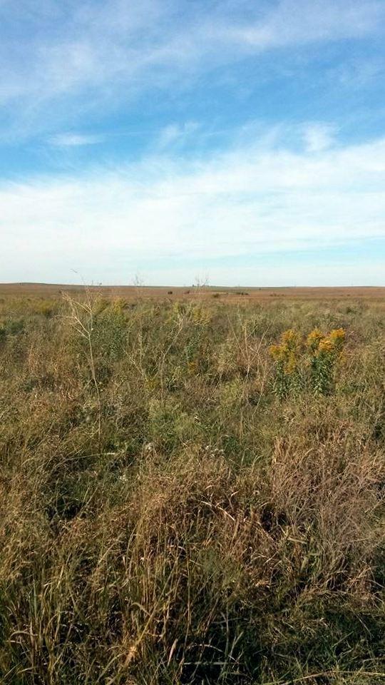 Gorgeous shot of the prairie