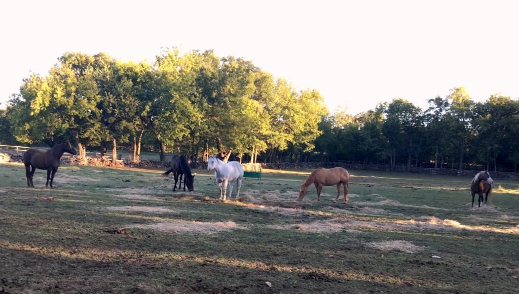 Kathy's horses